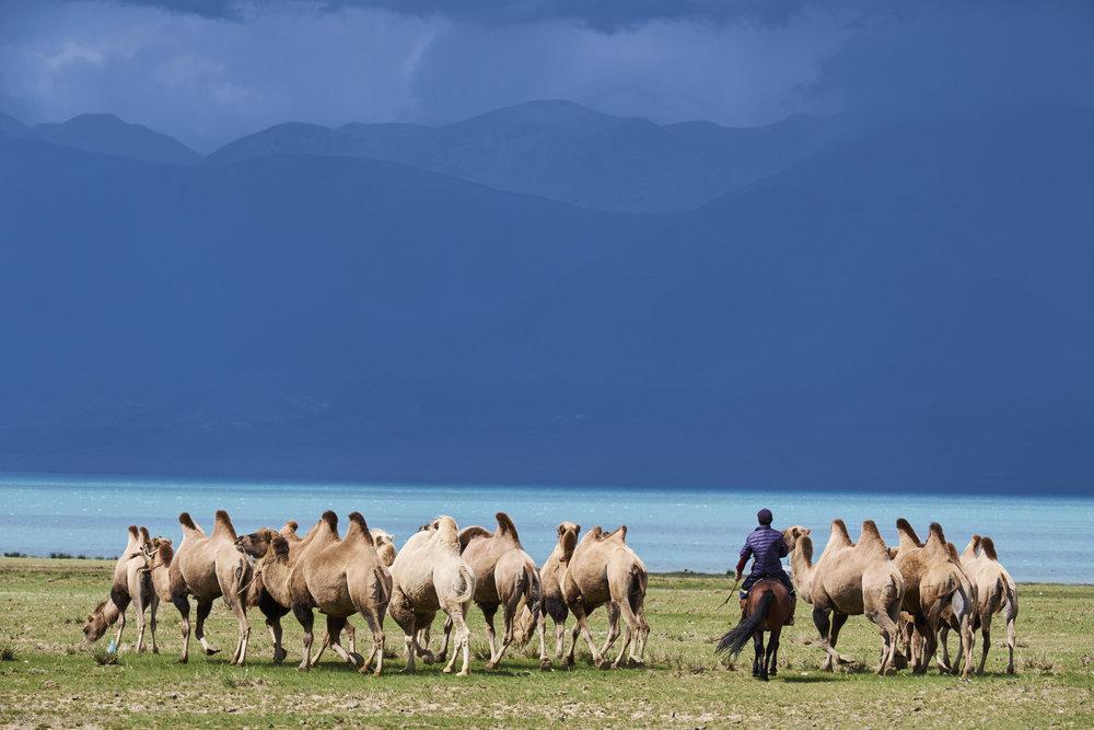 Mongolie5597.jpg