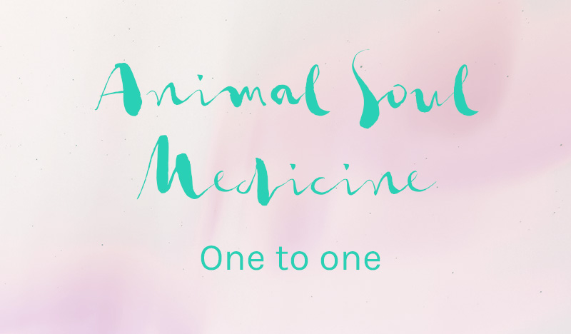 ollieneveu-animal-soul-medicine-1.jpg