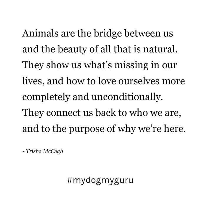 animalsarethebridge.jpg