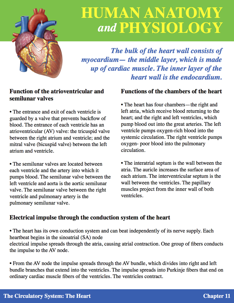 Introduction to Human Anatomy & Physiology — SAMA STORE