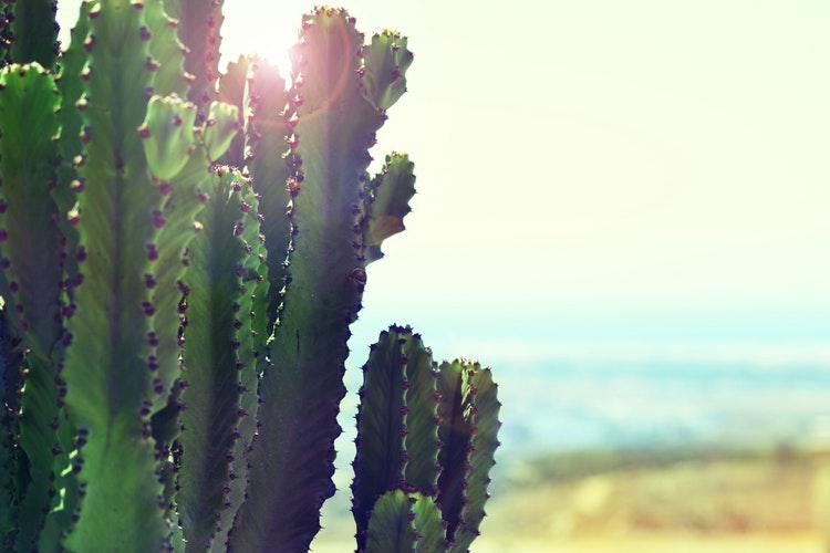 cactus in the sun.jpg