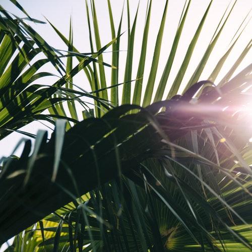 sunny palm.jpg