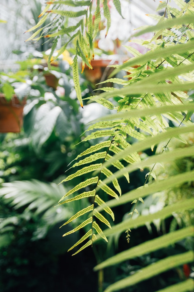 trailing ferns.jpg