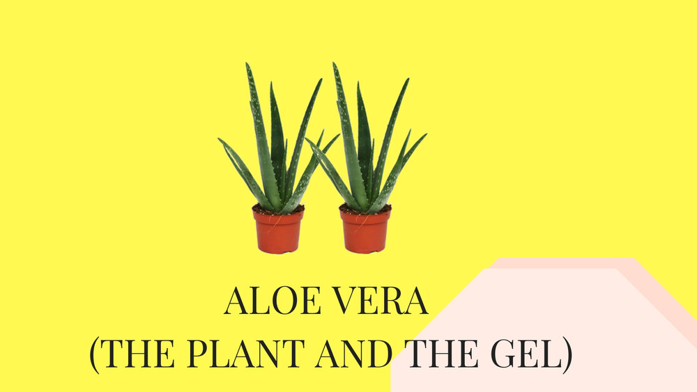 aloe vera - the edit.jpg