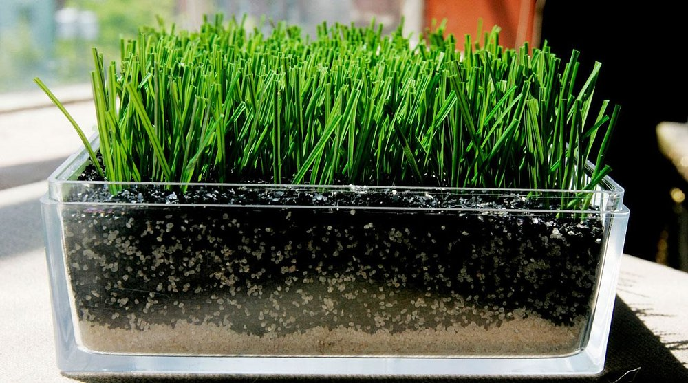 Artificial Grass Vs Turf With Costs Synthetic Turf Safe Healthy Playing Fields Coalition