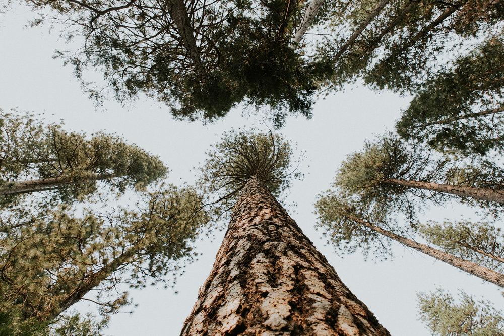 ECPhoto_Yosemite_9.jpg