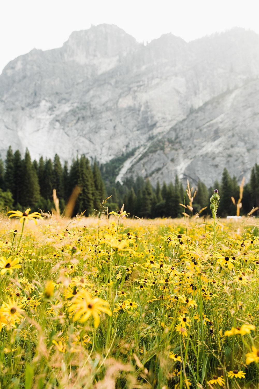 ECPhoto_Yosemite_12.jpg