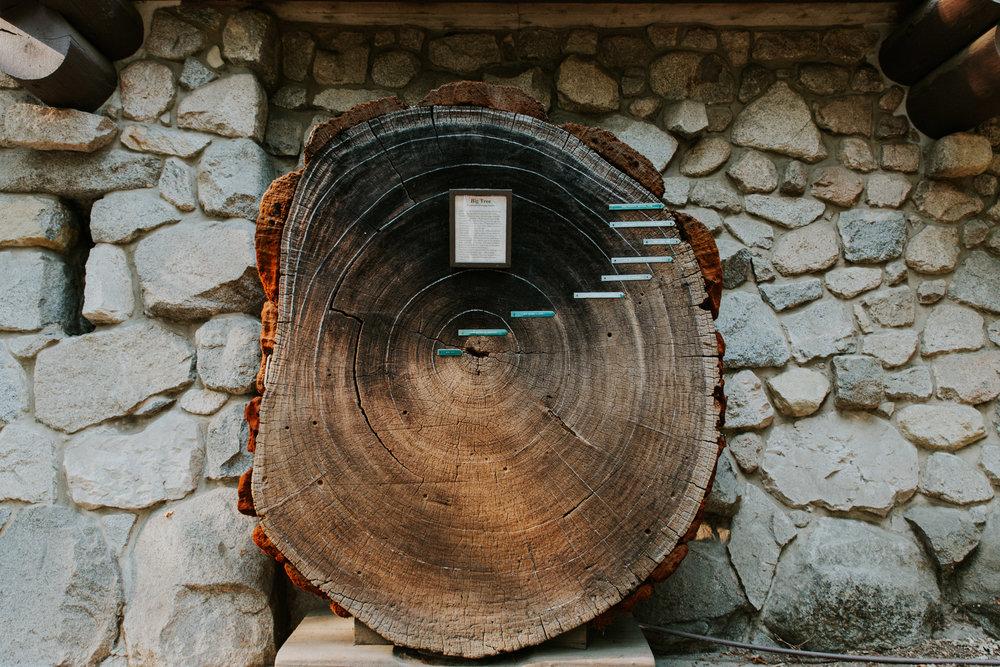 ECPhoto_Yosemite_20.jpg