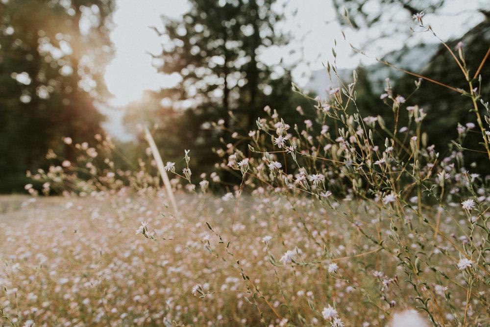 ECPhoto_Yosemite_29.jpg