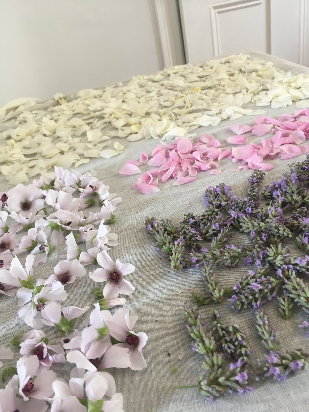 Laying flowers out to dry on sheets of muslin cloth