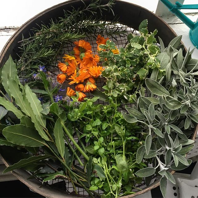 🌿🌿Today's harvest basket. Can you name all the herbs here? Still plenty to pick in the garden at this time of year!🌿🌿