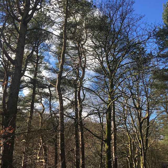 Nothing like a stroll in the woods to blow away the cobwebs! A rare weekend without workshops allowed us to escape London for a little rest and exploring. Hebden Bridge (30mins away from Manchester) has everything you need! The @nationaltrust Hardcastle Crags, plenty of independent shops showcasing local artisans AND a cute vegan cafe @humblestofpleasures ☺️