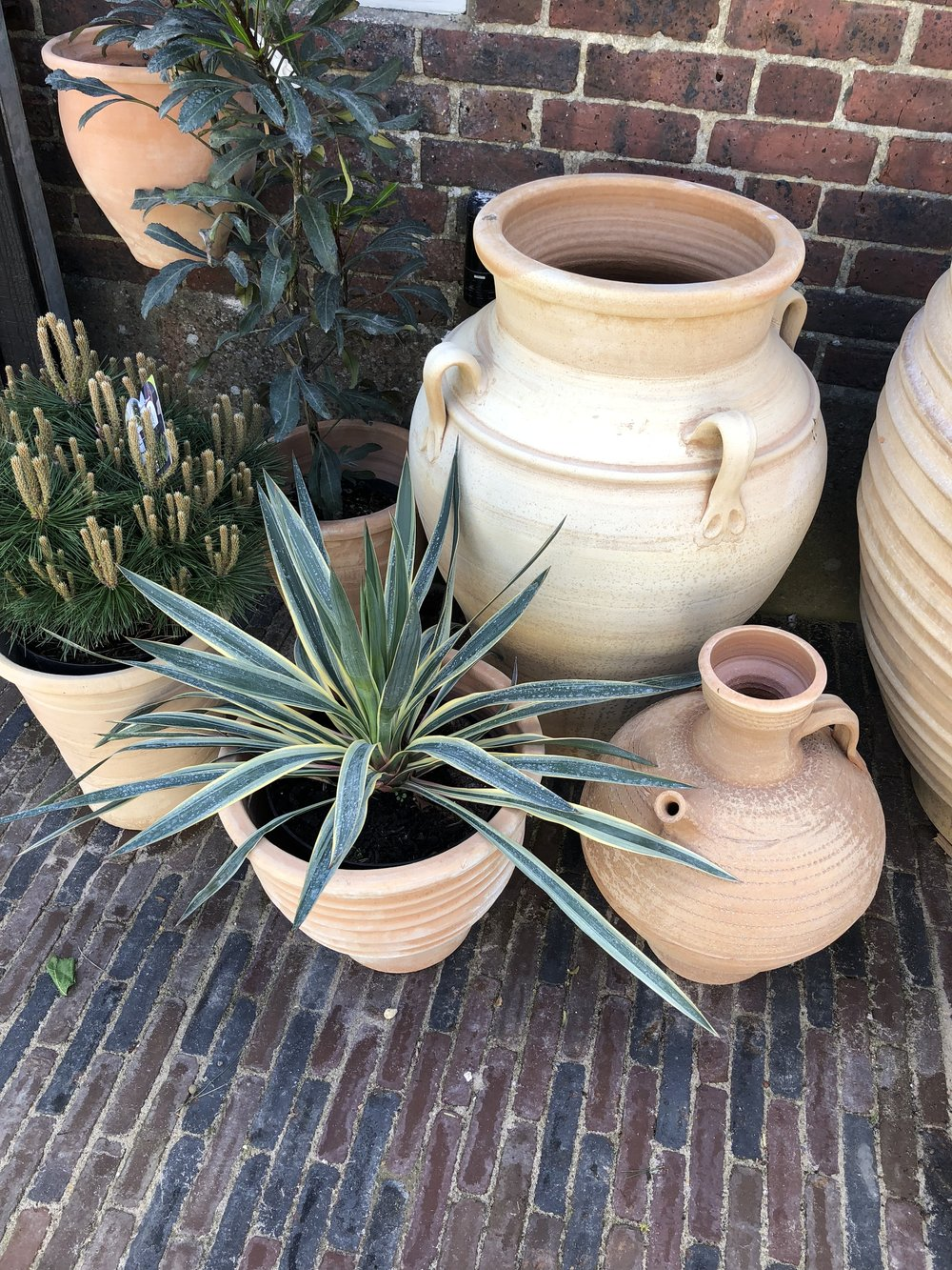 A GARDEN INSTALLATION  David and his team from  Pots & Po  ithoi are setting up our very own Riad, creating a garden in the middle of our shop ....