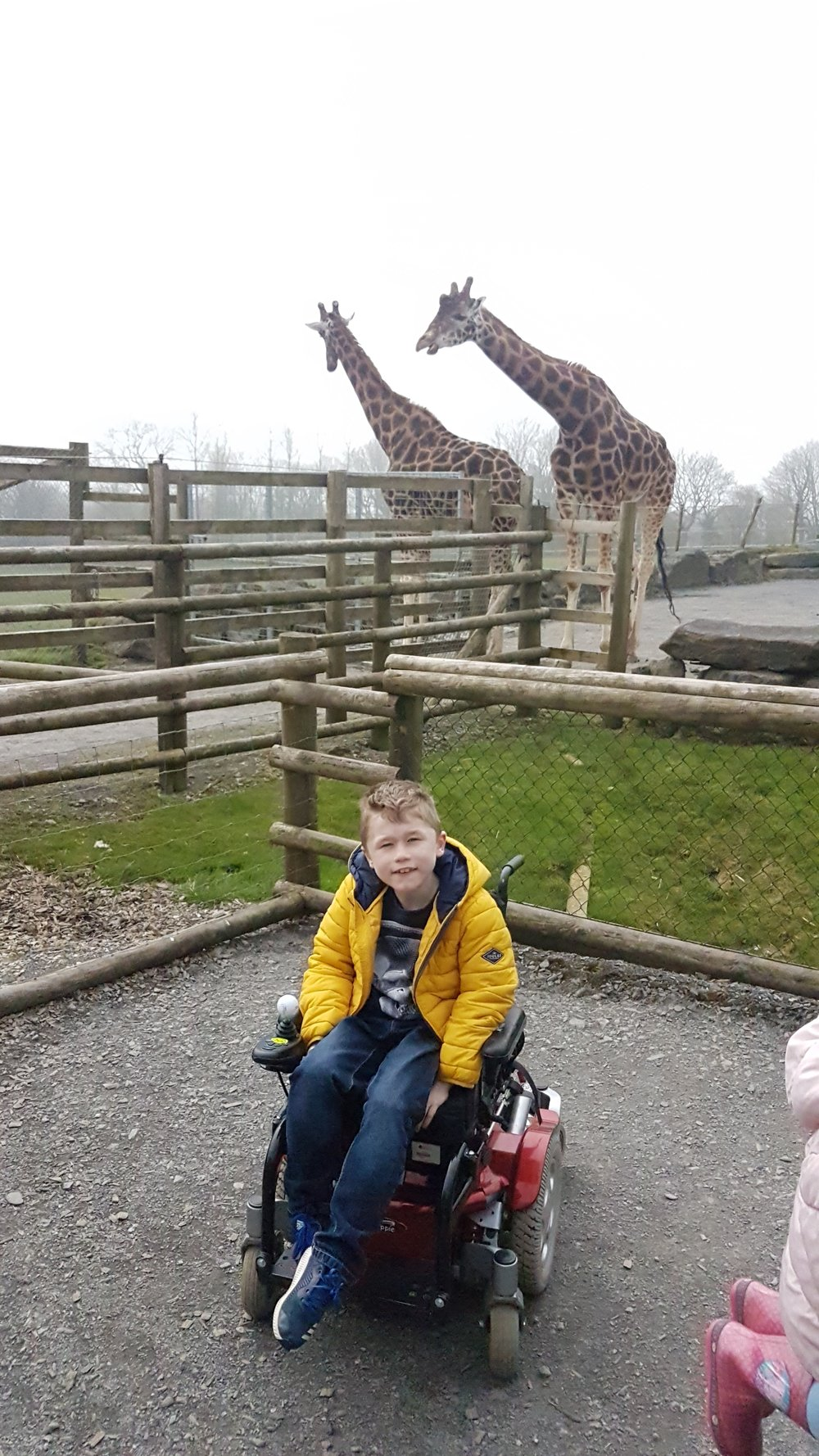 Charlie loved the giraftes