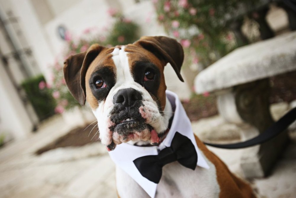 dog-in-bow-tie-1024x683.jpg