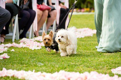 Dogs_In_Weddings_04.jpg