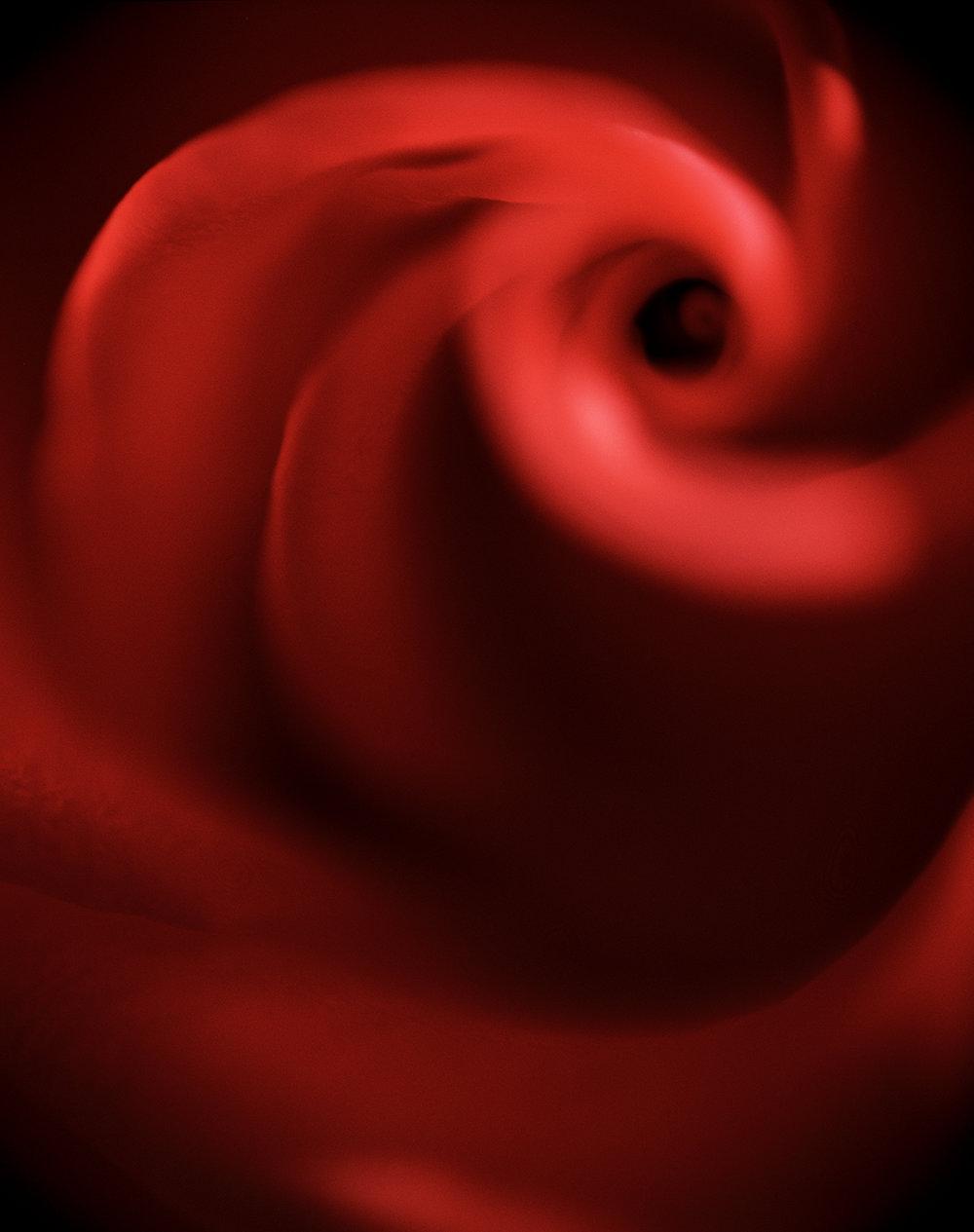 rose swirl.jpg