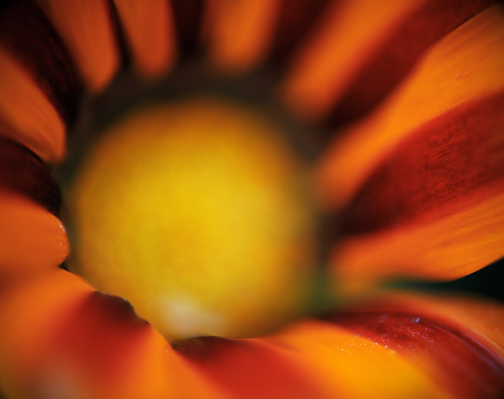 red orange flower.jpg