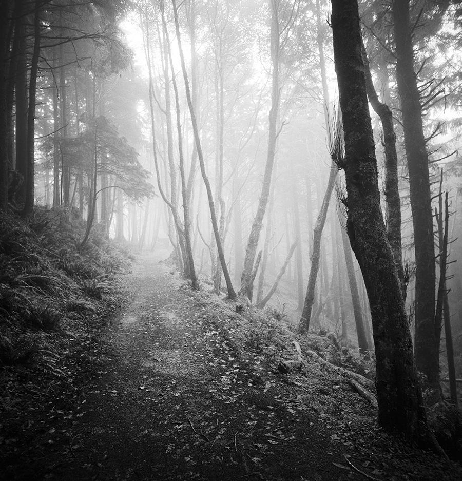 Cascade Head forest / Kodak Tri-X