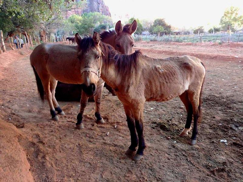 donkey-mule.jpg