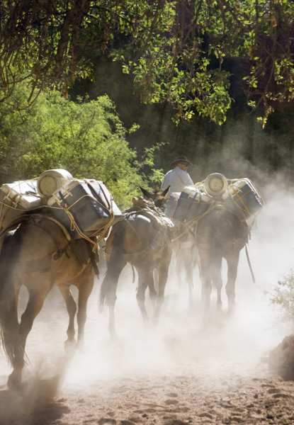 Horse-Packers-in-Havasupai-aoa.jpg