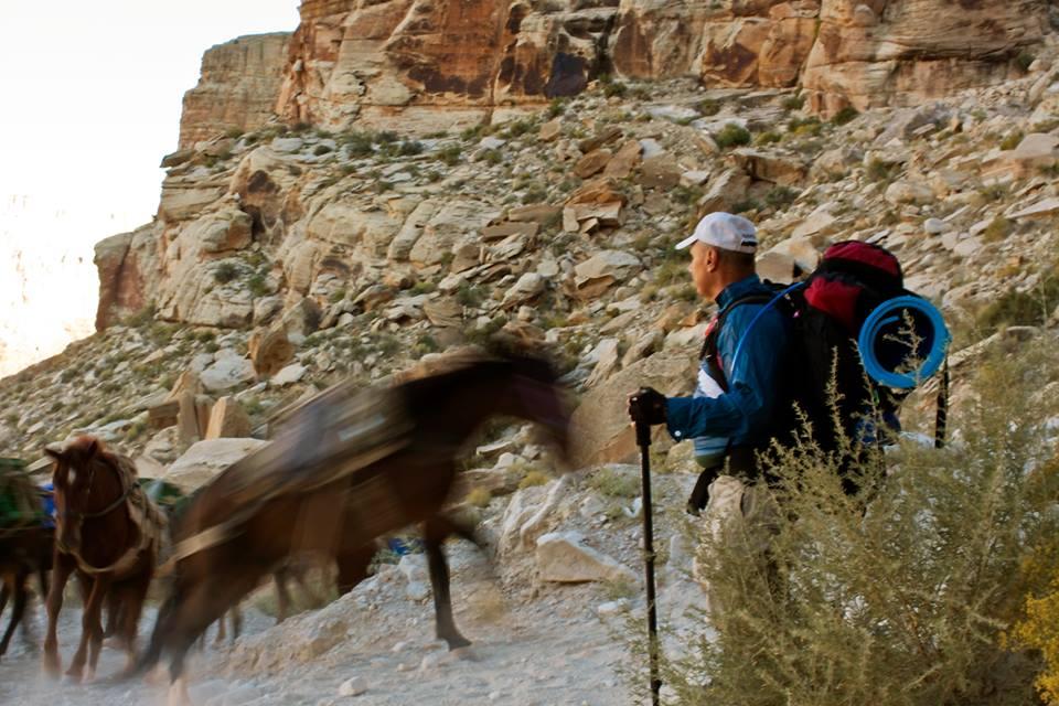 horsesrunning3.jpg