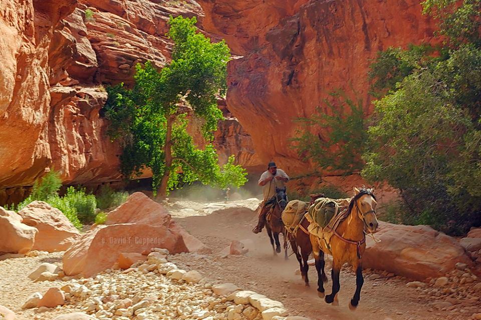 horsesrunning6.jpg