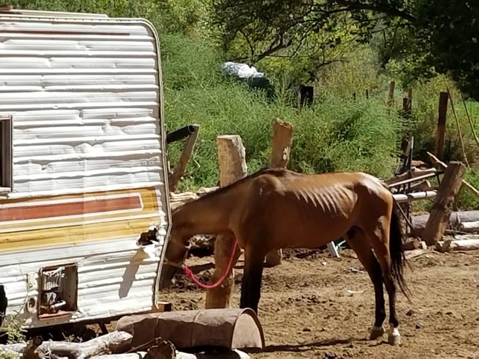 trailerhorses2.jpg