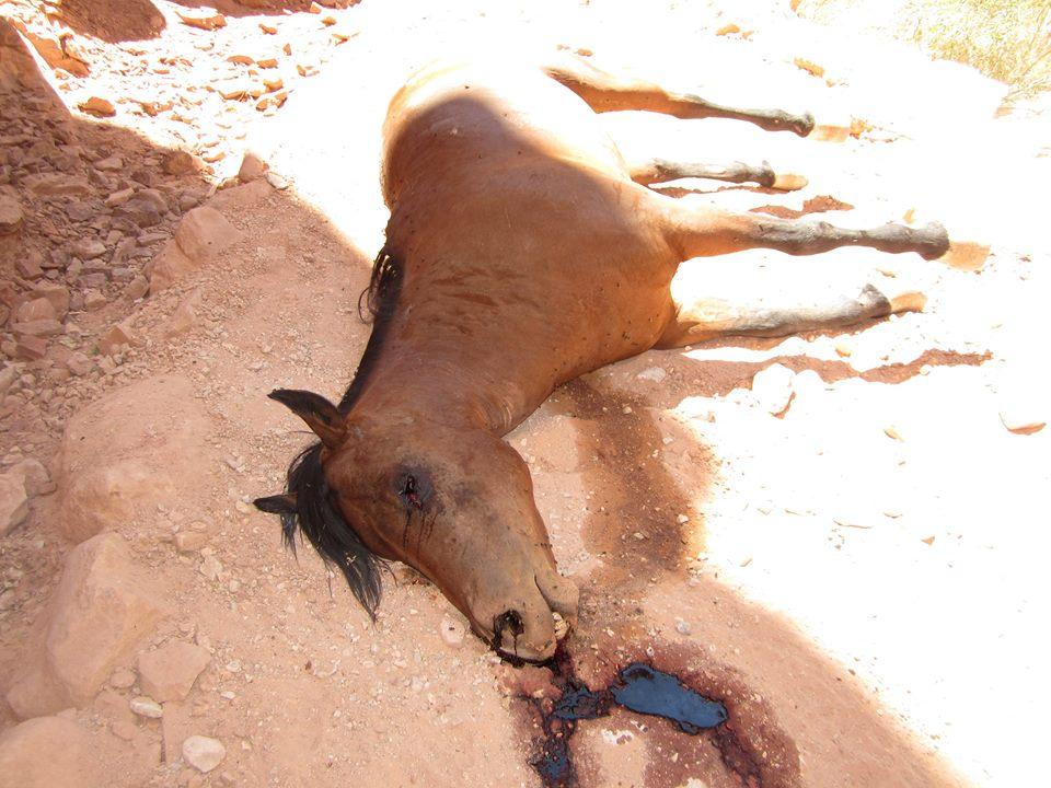 horsecarcass3.jpg
