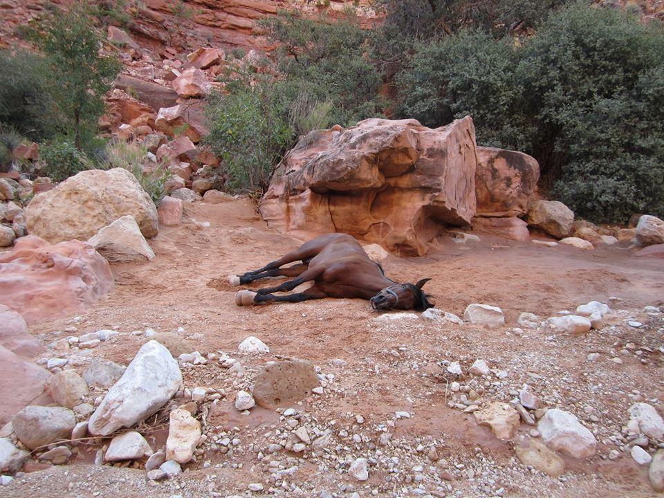 horsecarcass4.jpg