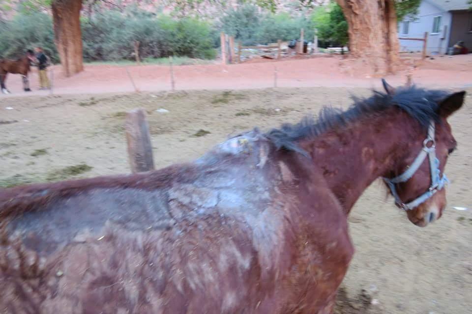 horse-walking.jpg