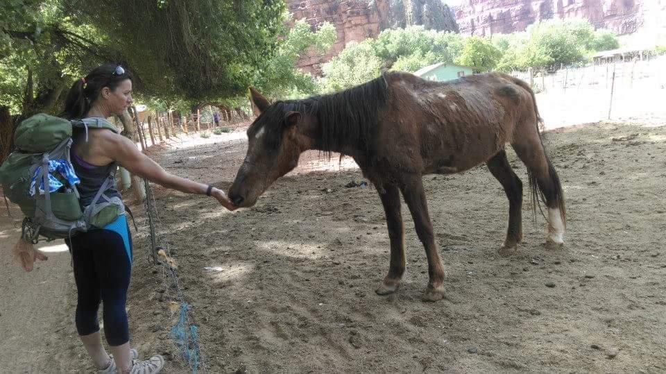 tourist-feeding-horse.jpg
