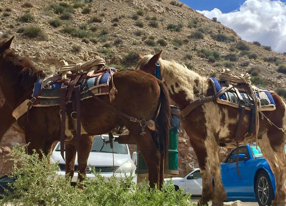 danne-packhorses2.jpg