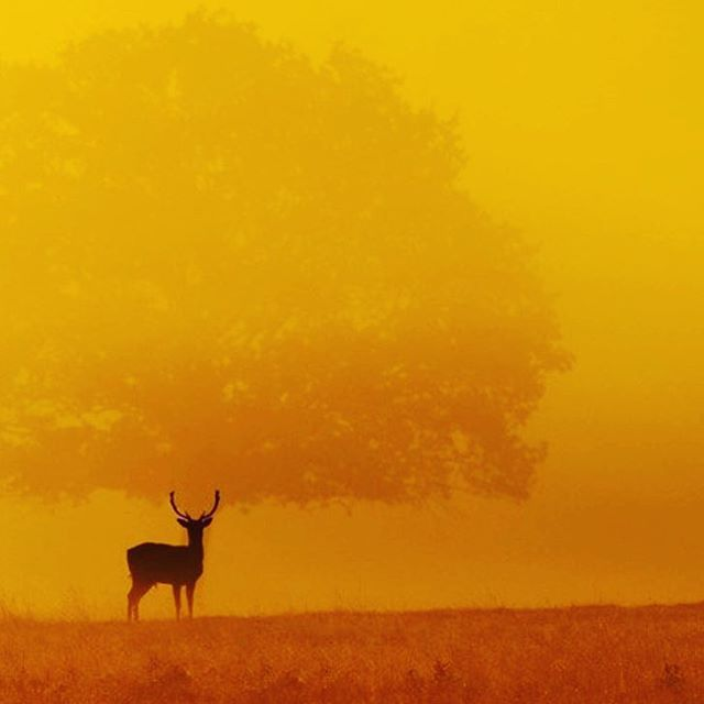 Oh my deer, do you see how exquisite you are? ✨  #regram: @shahin.nature