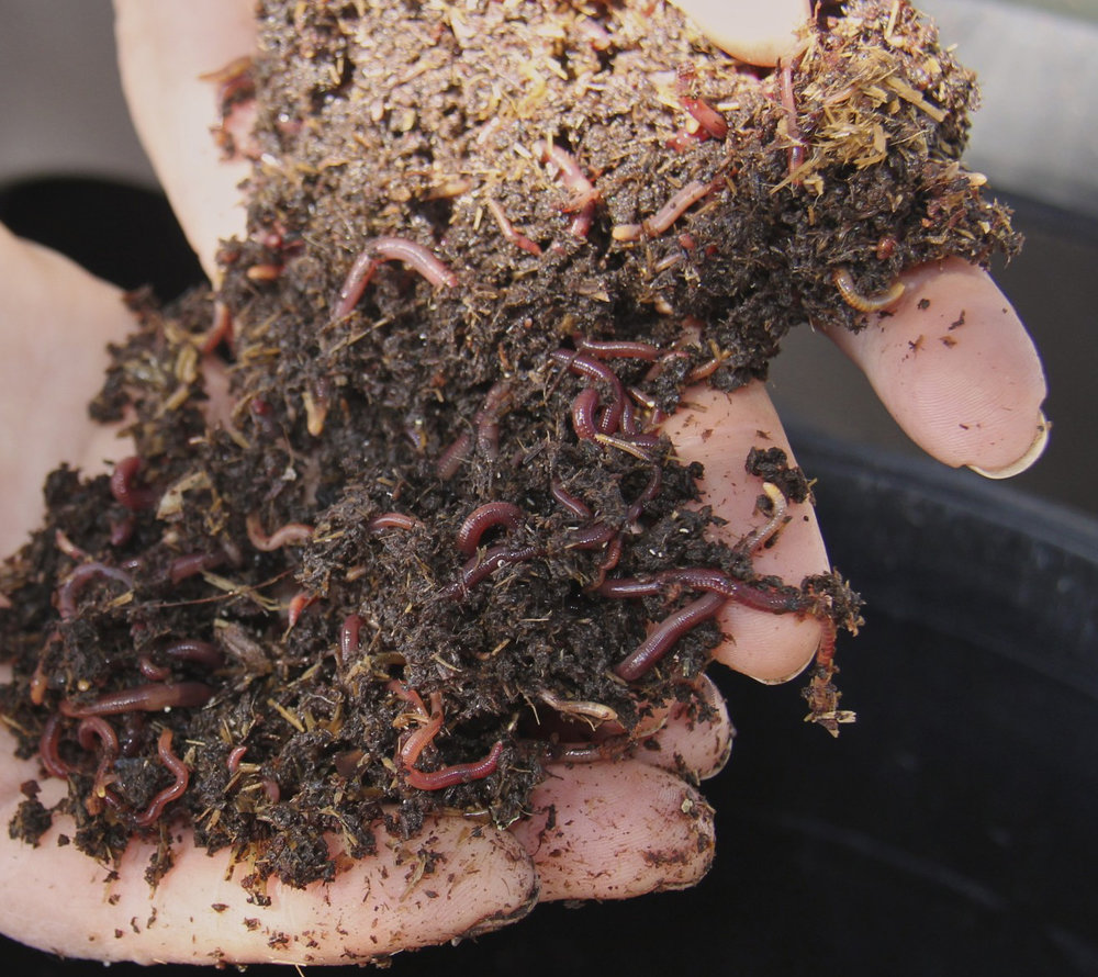 worms5.jpg