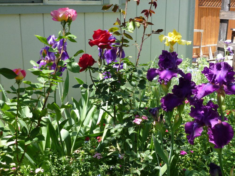 shers garden.jpg