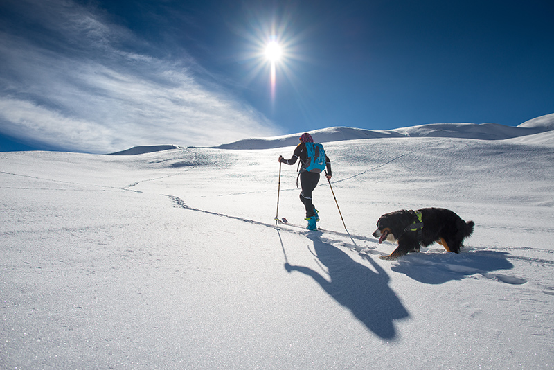 snowshoeing-with-dog.jpg