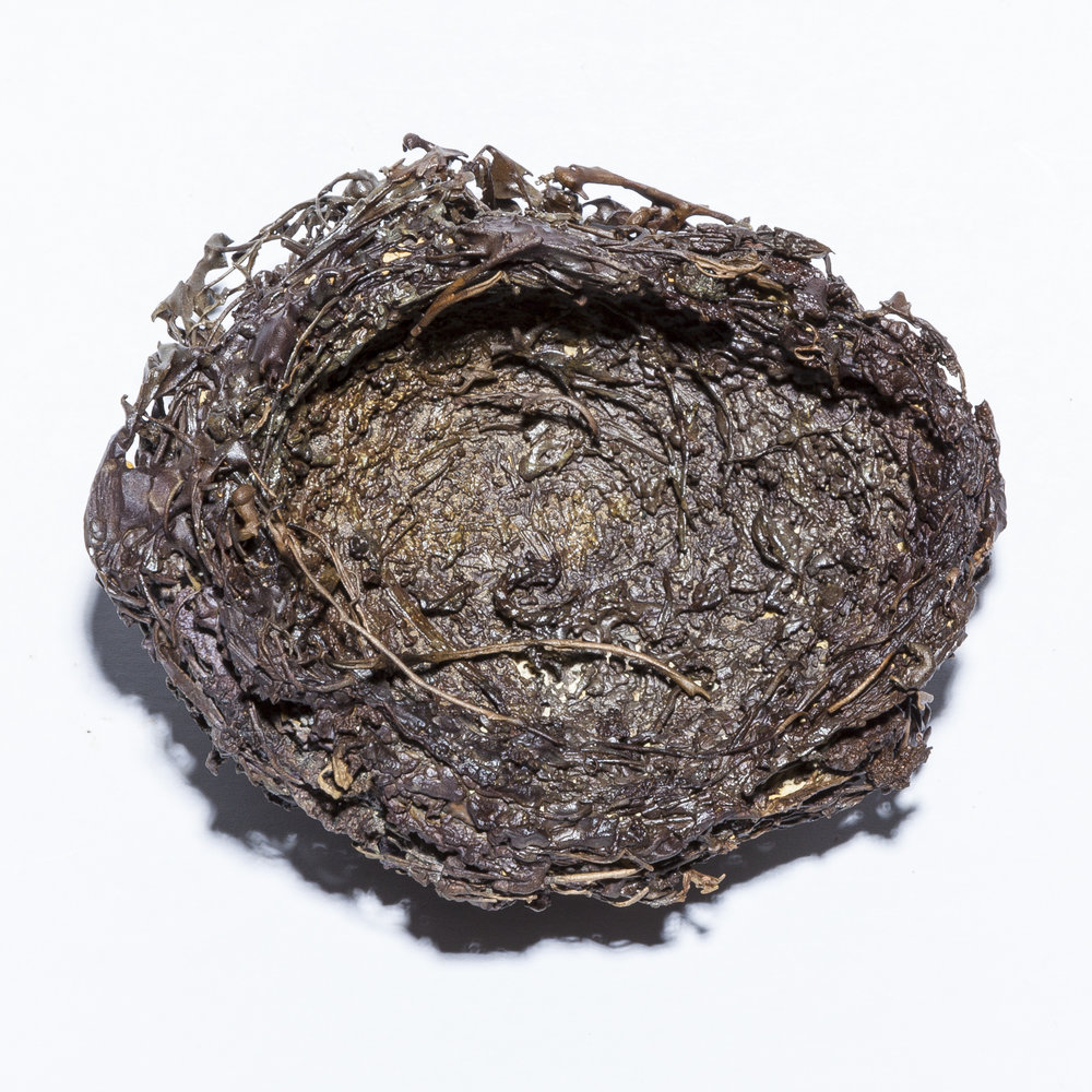BaleCreekAllen Nests-005.jpg