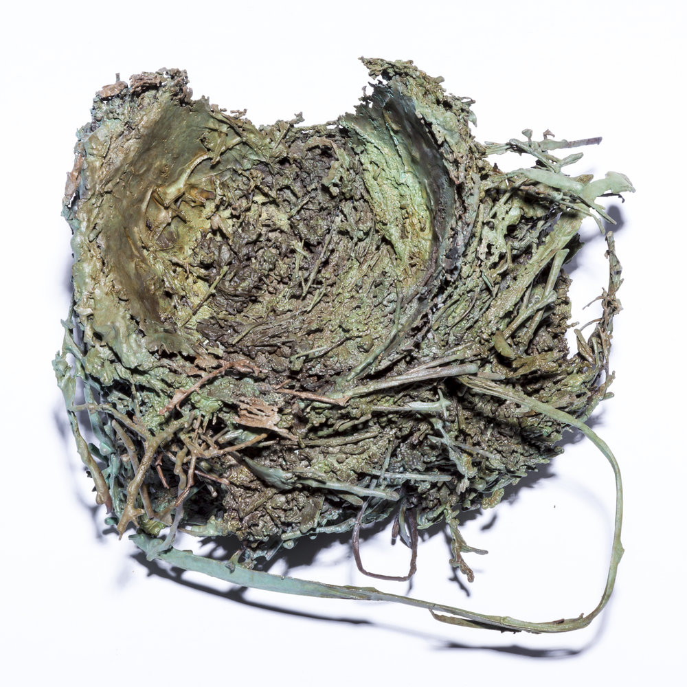 BaleCreekAllen Nests-017.jpg