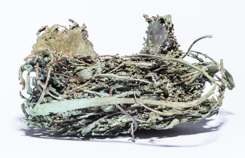 BaleCreekAllen Nests-027.jpg