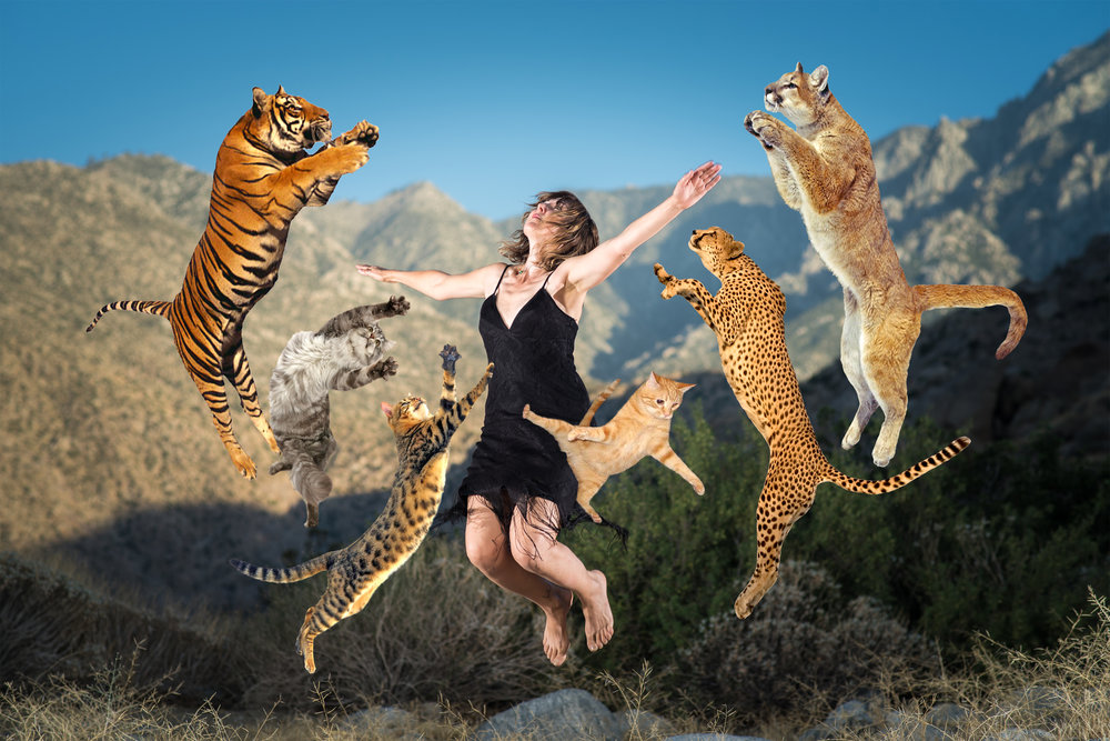 Bettina jumping with cats_B.jpg