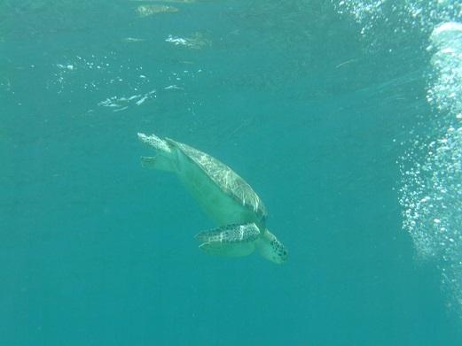 Belize_Snorkeling