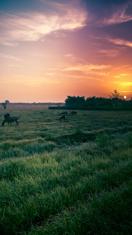 Cuban Countryside Sunrise