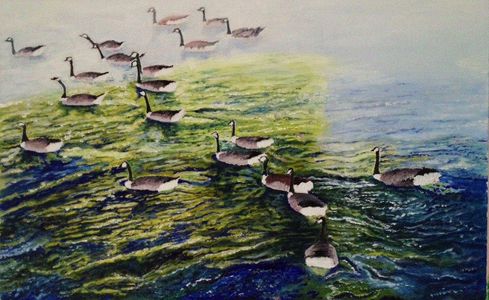 Birds on River Avon in Stratford