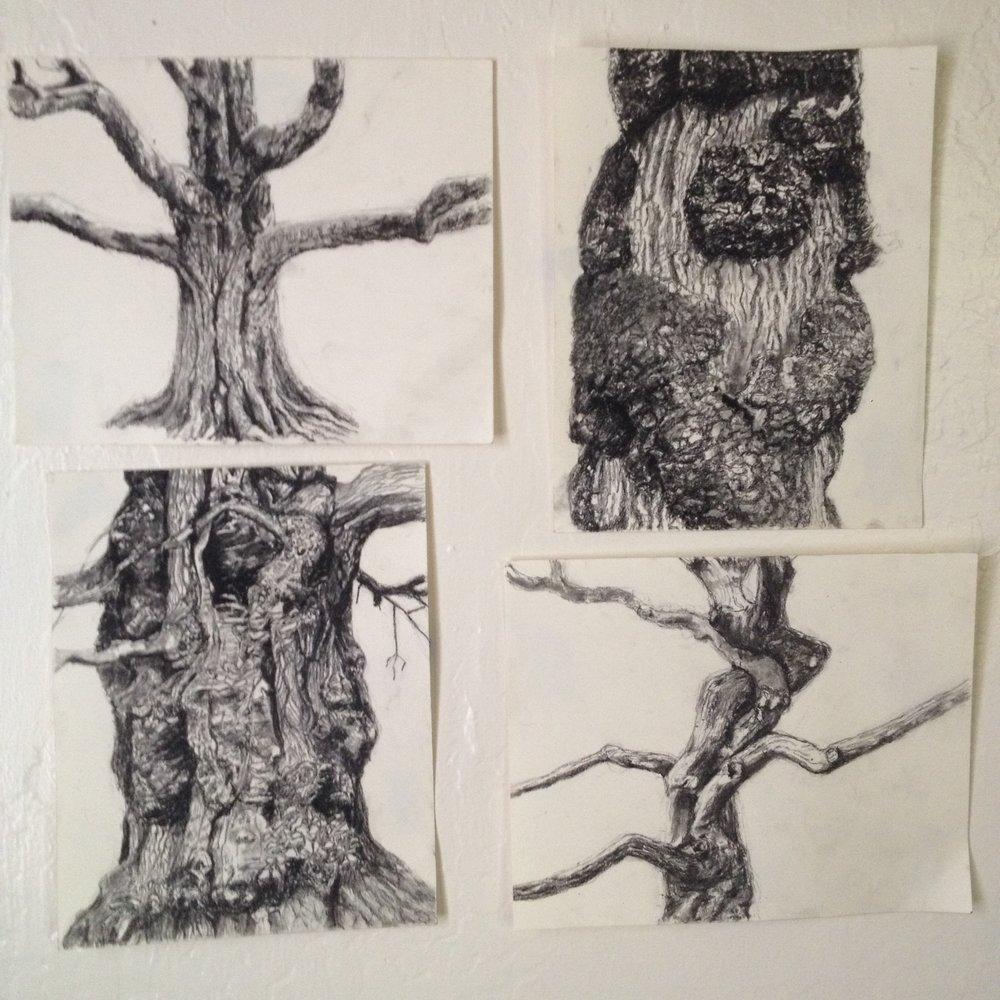 Four Westonbirt Trees