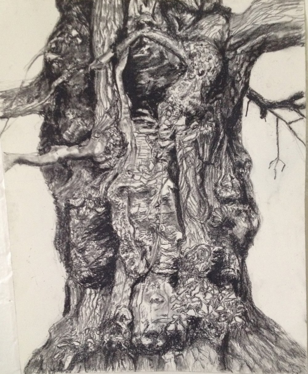 Westonbirt Hollow Tree