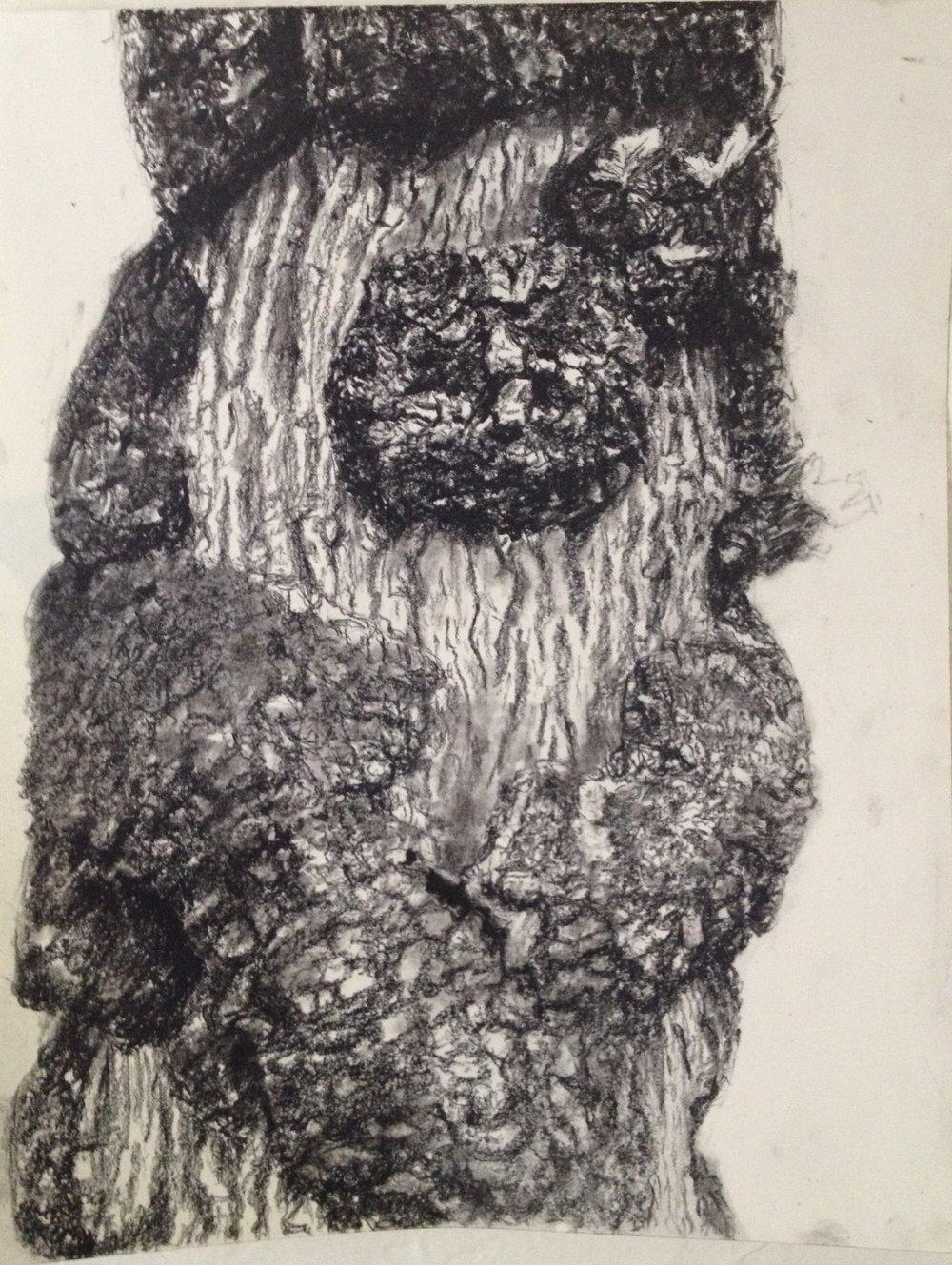 Westonbirt Bearded Tree