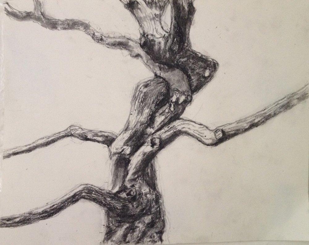 Westonbirt Thin Tree