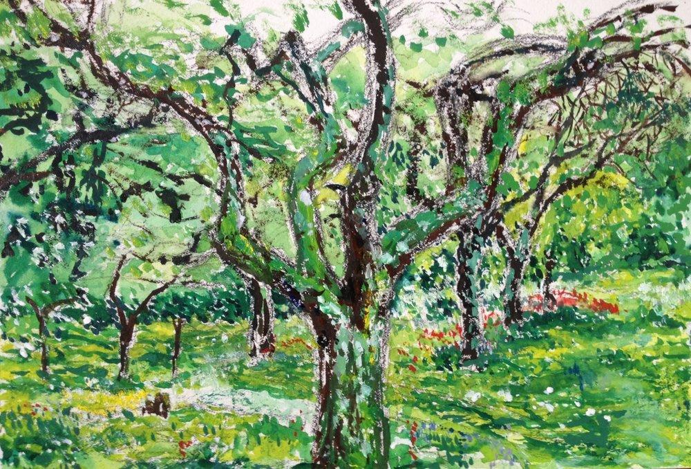 Hidcote Garden Orchard (Plein Air)