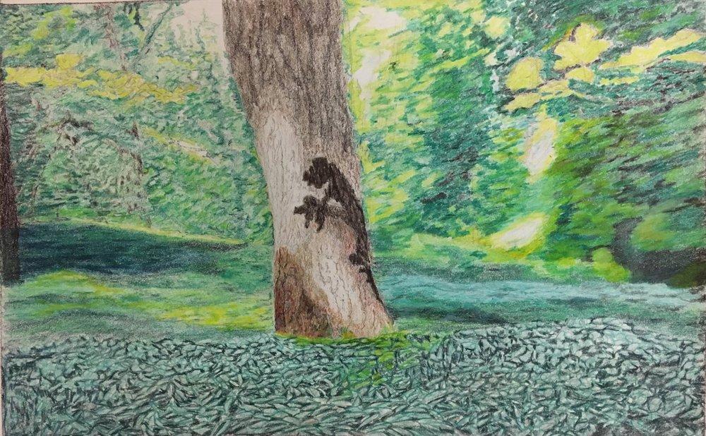 Lidcombe Wood Drawing